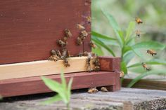 Taking Care Of Our Honeybees In The Winter on Old World Garden Farm at http://oldworldgardenfarms.com/2013/12/01/taking-care-of-our-honeybees-in-the-winter/
