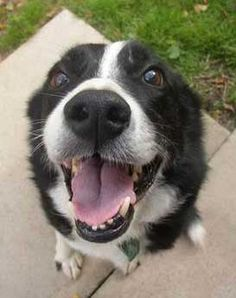 Border Collie Rescue … omg! stumbled on this, it looks EXACTLY light DookyDog!