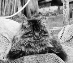 cat in blackandwhite with closed eyes Relaxing