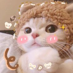 Kittens Cutest, Cats And Kittens, Cute Cats, N Animals, Cute Baby Animals, Cat Icon, Animal Wallpaper, Cute Creatures, Baby Cats