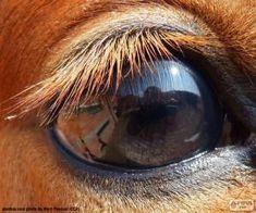 Ojo de un caballo / Horse eye