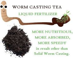 How to make Compost Tea with Worm Castings?