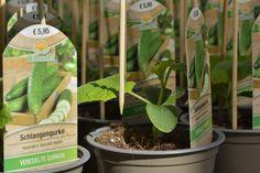 """☑ Stäben: Rankende Pflanzen werden gestäbt, so können sie von Anfang an an diesen Rankhilfen hochwachsen. """"Wo etwas wächst, gibt es immer viel zu tun."""" 🌱 So wartet auch bei uns in der Gärtnerei jeden Tag viel Arbeit auf unsere Mitarbeiterinnen. Photo And Video, Instagram, Videos, Glass House, Plants"""