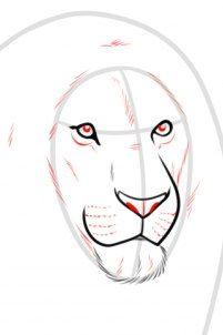 Auf folgende Seite finden Sie eine Anleitung für realistischen Löwe. Der Löwe zeichnen Schritt für Schritt ist ganz einfach und es nimmt nicht viel Zeit.