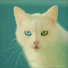 (10) If you could choose your eye color, which color would you choose? - Quora