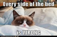 This Bed... I Hate It!-Grumpy Cat
