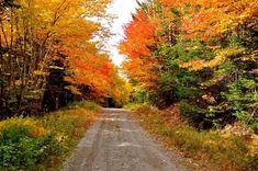 Colored Leaves, New Brunswick, Scenery, Country Roads, Canada, Landscape, Paisajes, Nature