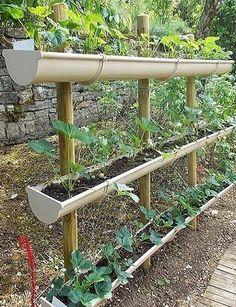 petite astuce pour cultiver beaucoup de fraisiers quand on n 39 a pas beaucoup de place au sol. Black Bedroom Furniture Sets. Home Design Ideas