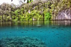 Submersion Shot in Raja Ampat by zoly55