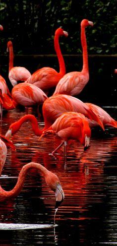 Flamingo's lake by Steveprice.deviantart.com on @deviantART