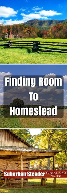 Finding room to homestead can be a tricky task for the typical suburban homesteader. This article will help you find room to homestead on your lot.