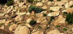 Kreakert sziklakert 2014 junius Garden, Garten, Gardens, Tuin, Yard