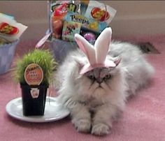 The Ultimate Guide To Having The Best Easter Ever