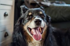 Regarding Dog Ownership, We Know It All – Precise Dog Food