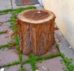 1000 images about restoration ideas on pinterest tree for Tree stump table diy