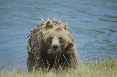 Photo Bear bath by Rasmus  Bostrup pedersen  on 500px