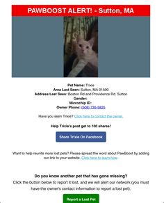 Lost Cat Named Trixie: Sutton, MA Cat Names, Have You Seen, Lost & Found, Pets, Animals And Pets
