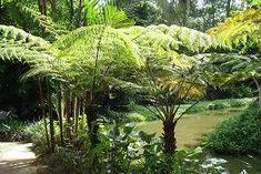 http://www.natureloveyou.sg/Plants-C.html