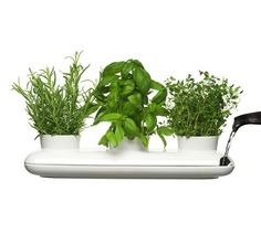 streamlined herb garden!