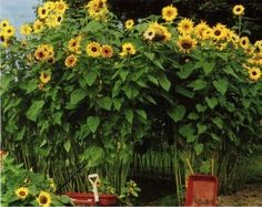 Sunflower House...cute idea! This is for all my mommy friends and family!