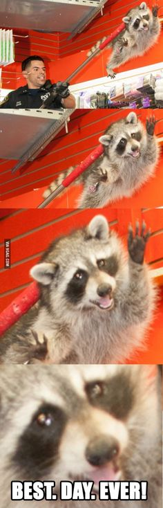 Racoon Best Day Ever!