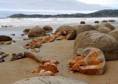 Moeraki Boulders New Zealand | image credit flickr user ibthx768 image credit flickr user nezzen