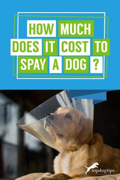 You have a new pup, but now need to get them fixed! Here are some points to be aware of so you don't end up paying unnecessary costs. Cute Dogs Breeds, Dog Breeds, Dog In Heat, Pregnant Dog, Dog Health Tips, Animal Control, Fix You, Saving Money, Pup