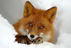 рисунки лисы - Поиск в Google