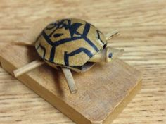 Hawaii Mini Turtles, Hawaii, Animals, Animales, Animaux, Animal, Animais, Hawaiian Islands
