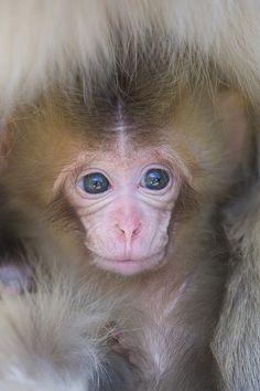 Baby Torako by Masashi Mochida on Flickr