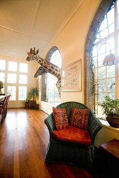 Nice room, love the floor, nice big windows.... Rothschild giraffes at the Giraffe Manor, Kenya by Jim  Zuckerman