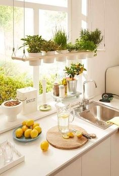 Having plants in your home will improve the air quality of your home and make it look more inviting. [Indoor Plants Potted Plants Indoor Herb Garden Small House Plants Comfortable Home Decor Improving House Comfort Plants In Kitchen Brighten Up Your Home] Kitchen Plants, Kitchen Dining, Herbs In Kitchen, Kitchen Ideas, Herb Garden In Kitchen, Herbs Garden, Kitchen Cupboard, Kitchen Sink, Kitchen Shower
