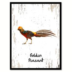 Golden Peasant Bird Canvas Print, Black Picture Frame Gift Ideas Home Decor Wall Art Decoration