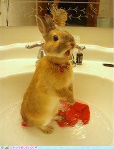 Bath bunny