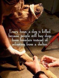 save a life - adopt.