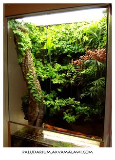 paludárium rostliny - Hledat Googlem