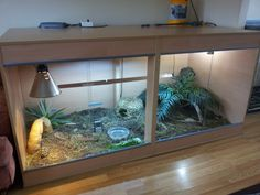 Indoor Tortoise Enclosures