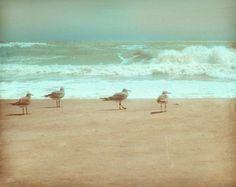 Seagull Beach Kunstdruck - Aqua Green Gray Tan Vogel Beach Haus Ozean Home Decor Wand Kunst Fotografie
