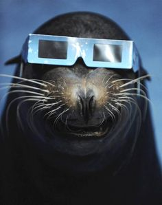 """The sea lion sits in protective glasses during the annular solar eclipse in an aquarium in Tokyo, May 21. (Reuters)"""