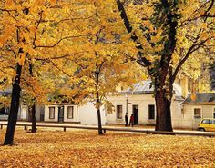 Arrowtown, Central Otago, New Zealand - one of the few places in New Zealand with true autumn colours. Autumn In New Zealand, Arrowtown New Zealand, The Lord Of The Rings, Places Ive Been, Places To Go, Central Otago, New Zealand Landscape, Cool Countries, South Island