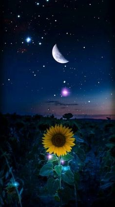 Starry Night wallpaper by - cb - Free on ZEDGE™ Tumblr Wallpaper, Cute Wallpaper Backgrounds, Pretty Wallpapers, Galaxy Wallpaper, Wallpaper Wallpapers, Iphone Wallpapers, Cellphone Wallpaper, Lockscreen Wallpaper Android, Iphone Wallpaper Moon