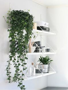 5 Air Purifying Plants for Indoors