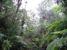 Dalla Baviera all'Amazzonia: le foreste più belle del mondo