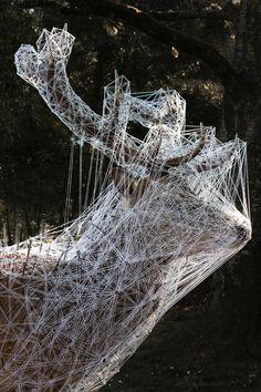 les Animaux stellaires - Julien Salaud