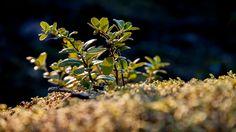 Autumn Light - Syksyn säteet by Pauliina Kuikka and Arto Lehikoinen Photography