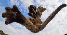 Turns out, cats know more martial arts than ninjutsu. Japanese photographer Hisakata Hiroyuki has decided to dedicate a fair portion of his time to shooting cats during their totally serious combat practices, and the result is purrrfect.
