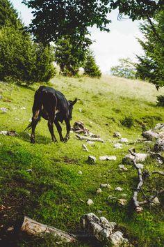 Mountains, Awesome, Nature, Blog, Travel, Animals, Naturaleza, Viajes, Animales