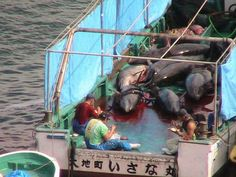 Dolphin massacre - Taiji, Japan