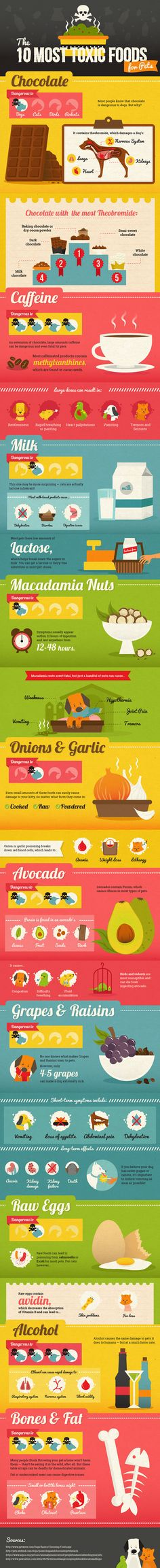 Infographic of the 10 Most Toxic Foods for Pets
