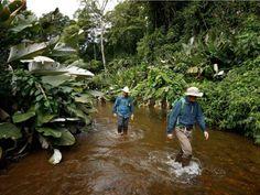 En travesía por La Mosquitía, exploradores de Nat Geo se contagiaron de Leishmaniasis - Diario El Heraldo Honduras